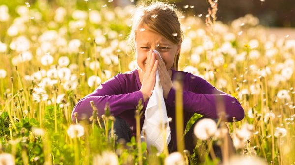 Girl with hayfever sneezing in a field of highly pollinating plants
